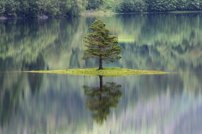 Tree in Water - Rose L - Unique