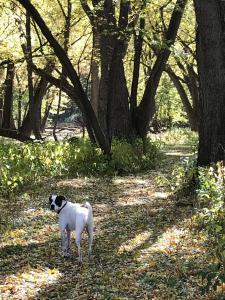 Duke in the woods
